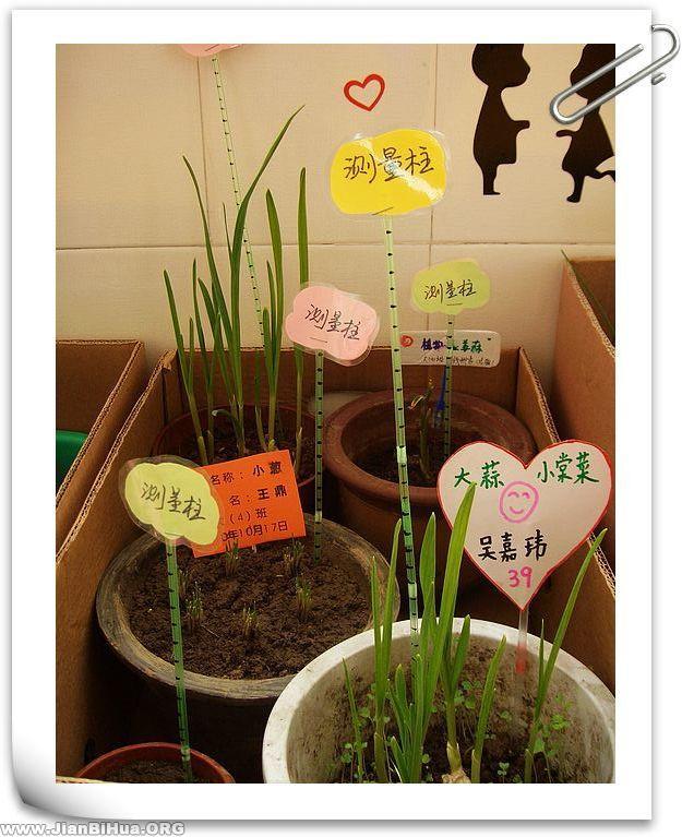 布置 幼儿园 自然/幼儿园自然角布置图片:小草有名字