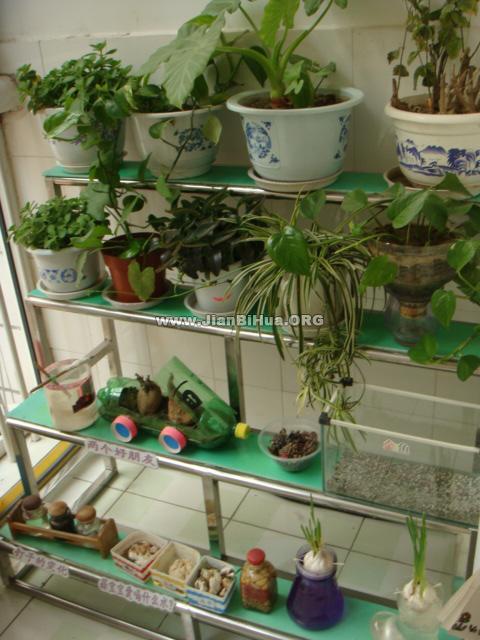 幼儿园植物角布置图片大全(第7张)