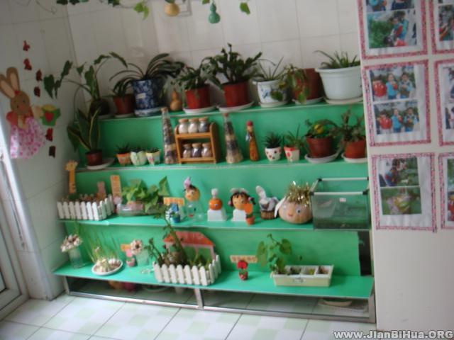 幼儿园植物角布置图片大全(第6张)
