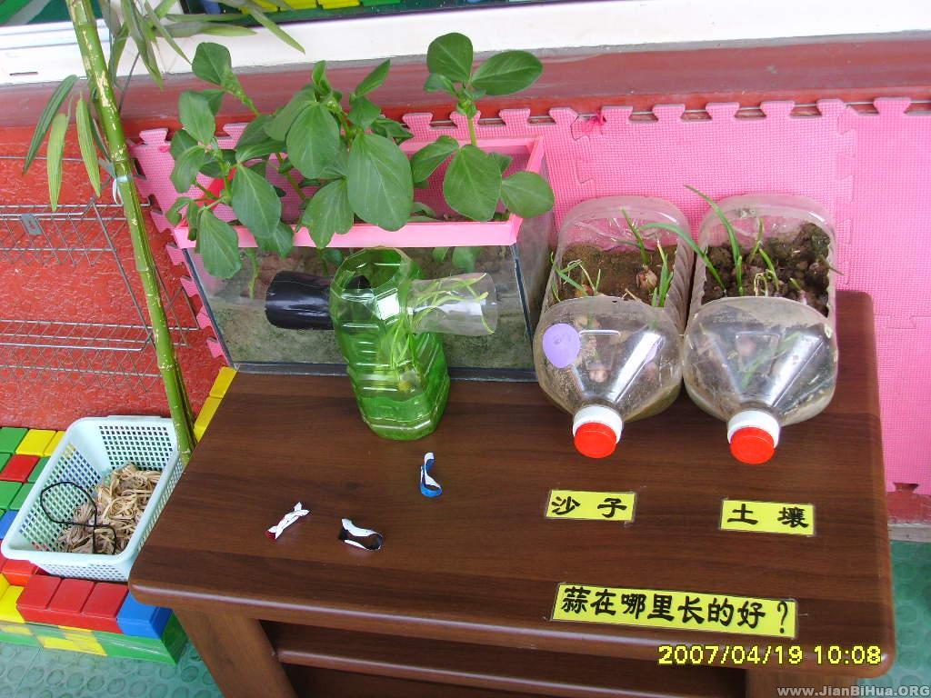 幼儿园自然角布置:植物角环境