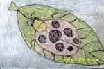 美丽的瓢虫儿童画2幅