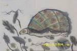 大海龟儿童水墨画