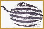 西瓜上的瓢虫儿童画