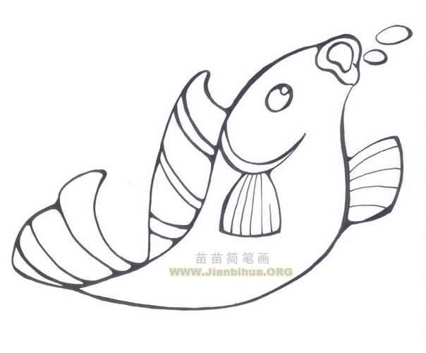 简笔画之鲤鱼