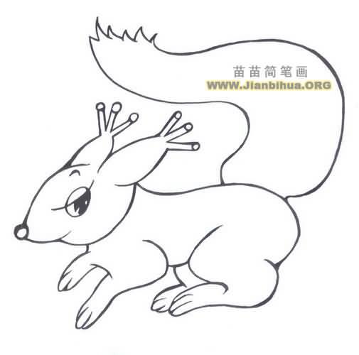 松鼠头的简笔画内容图片展示_松鼠头的简笔画图片下载