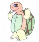 乌龟简笔画颜色图片大全