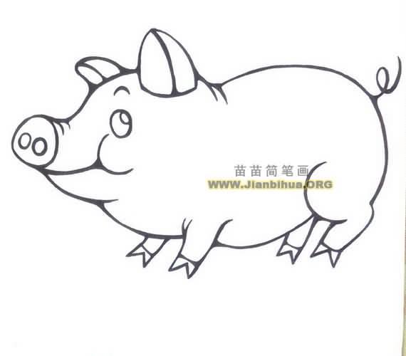可爱小猪简笔画图片大全