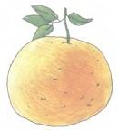 橘子的简笔画图片教程
