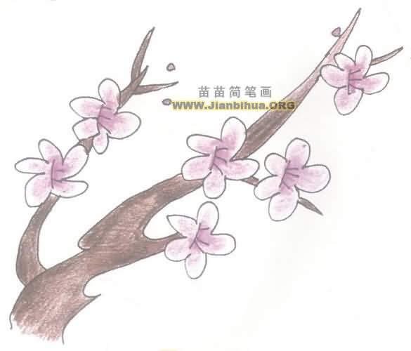 梅花简笔画画法教程图片