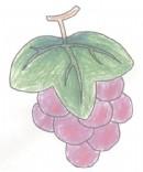 葡萄简笔画图片教程