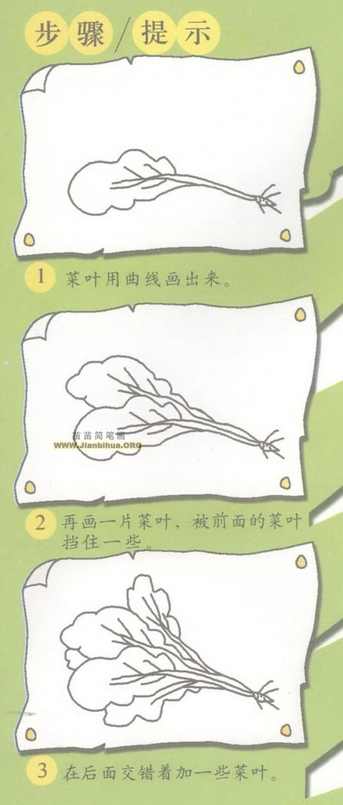 小青菜简笔画图片教程二