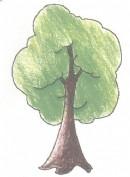 树的简笔画图片教程