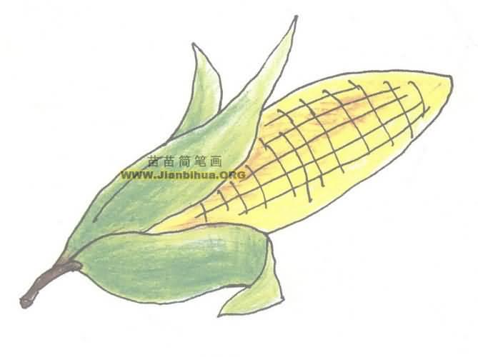 玉米简笔画图片教程