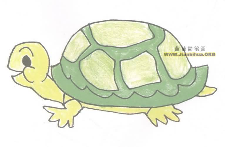 乌龟简笔画图片教程