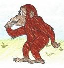 黑猩猩简笔画图片教程
