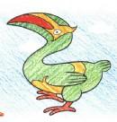 犀鸟简笔画图片教程
