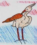 白鹭简笔画图片教程
