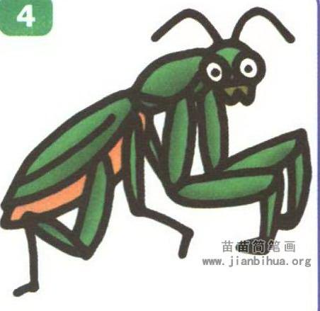 其中,中华大刀螳、狭翅大刀螳、广斧螳、棕静螳、薄翅螳螂、绿静螳等,螳螂是农业害虫的重要天敌.