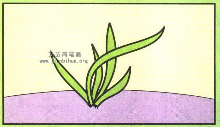 兰草简笔画图片 教程