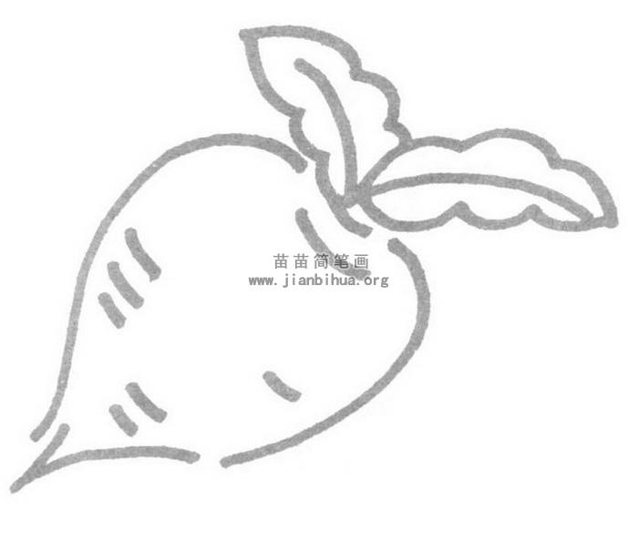 萝卜简笔画图片-萝卜儿歌和简笔画教程