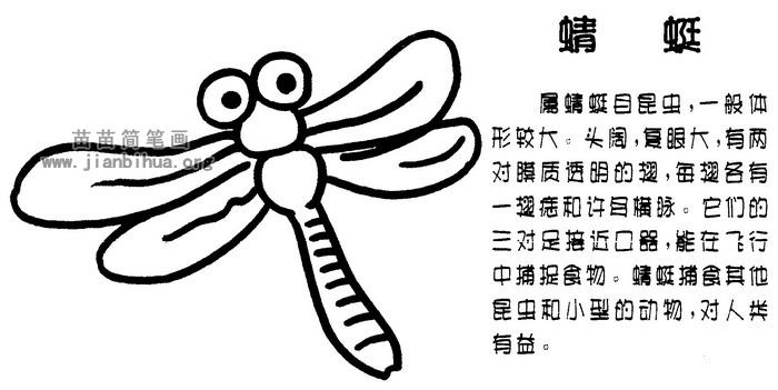 蜻蜓简笔画图片与知识