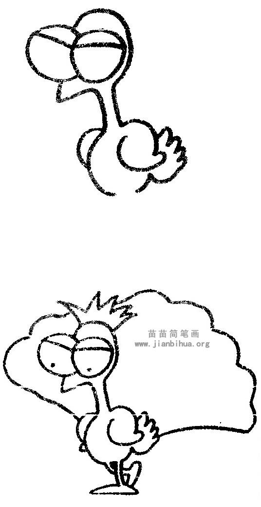 孔雀简笔画图片与知识