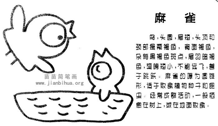 麻雀简笔画图片与知识