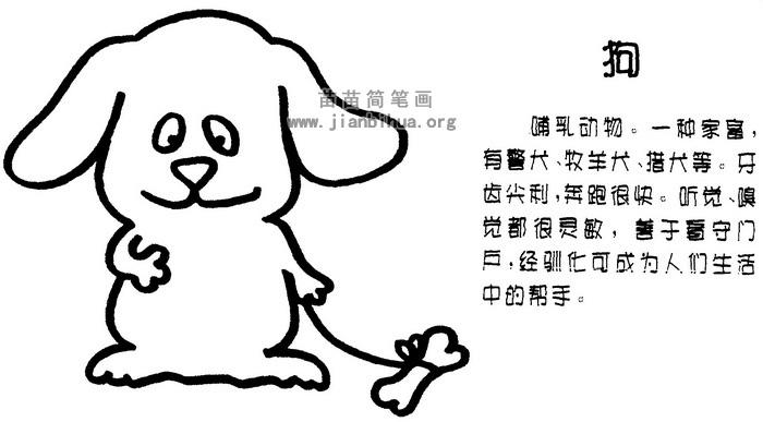 小狗简笔画图片与知识