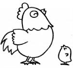 鸡的简笔画图片与知识
