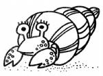 寄居蟹简笔画图片与知识