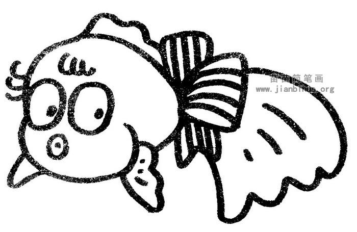 金鱼简笔画图片与知识