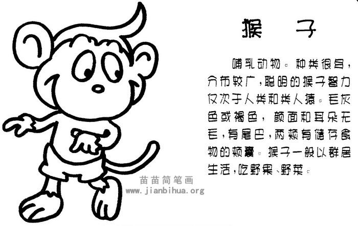 猴子简笔画图片与知识