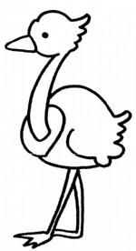鸵鸟简笔画图片与知识
