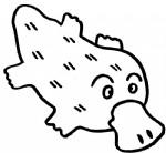 鸭嘴兽简笔画图片与知识