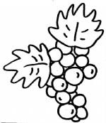 葡萄简笔画图片与知识