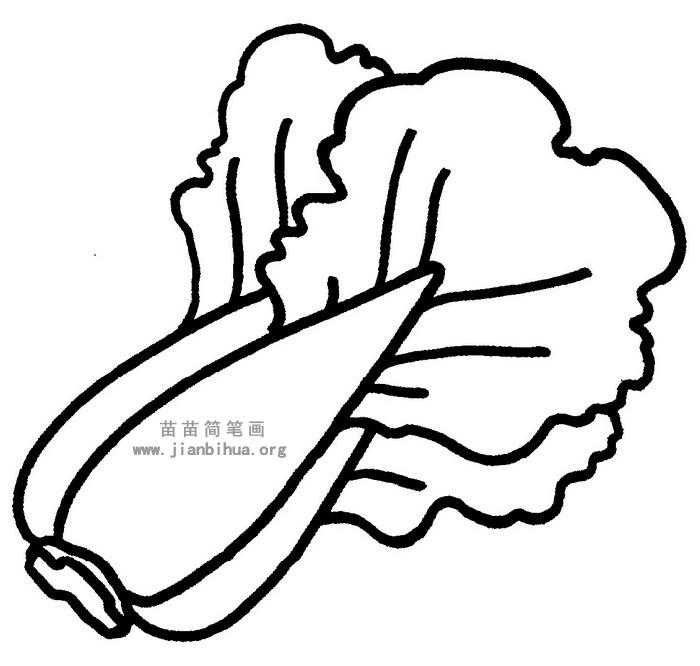 大白菜简笔画