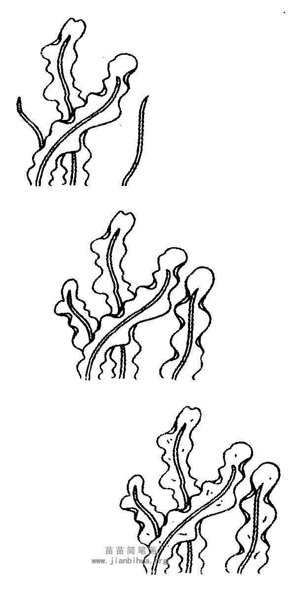 海带简笔画图片与知识 海带是褐藻的一种,生长在海底的岩石上,形状像带子,含有大量的碘质,可用来提制碘、钾等。 海带叶片似宽带,梢部渐窄,一般长2~5米,宽20~30厘米(在海底生长的海带较小,长1~2米,宽15~20厘米)。叶边缘较薄软,呈波浪褶,叶基部为短柱状叶柄与固着器相连。海带通体橄榄褐色,干燥后变为深褐色、黑褐色,上附白色粉状盐渍。 干海带其表面有白色粉末状随着,海带所含的碘和甘露醇尤其是甘露醇呈白色粉末状附在海带表面,没有任何白色粉末的海带质量较差。其次,观察海带以叶宽厚、色浓绿或紫中微黄、无
