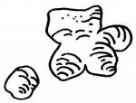 生姜简笔画图片与知识