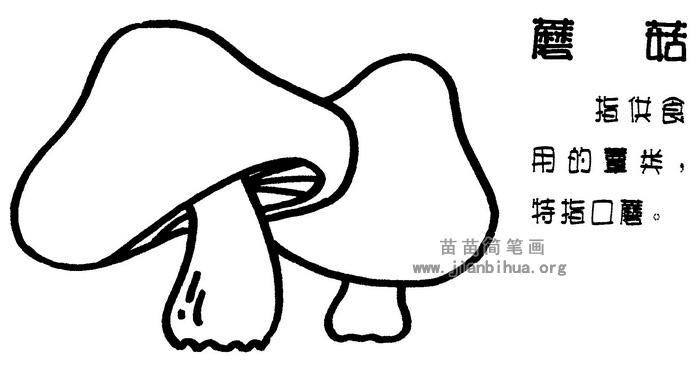 蘑菇简笔画图片与知识