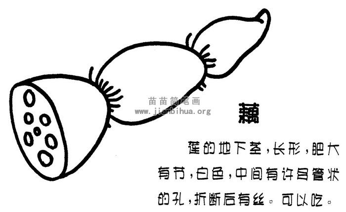 莲藕简笔画