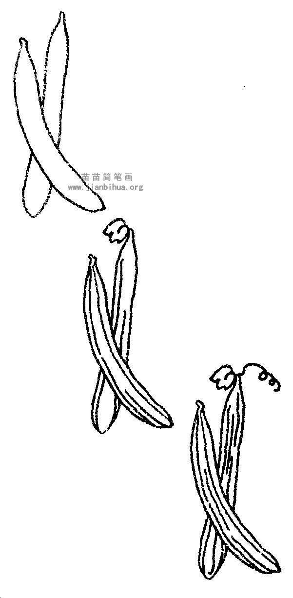 丝瓜简笔画
