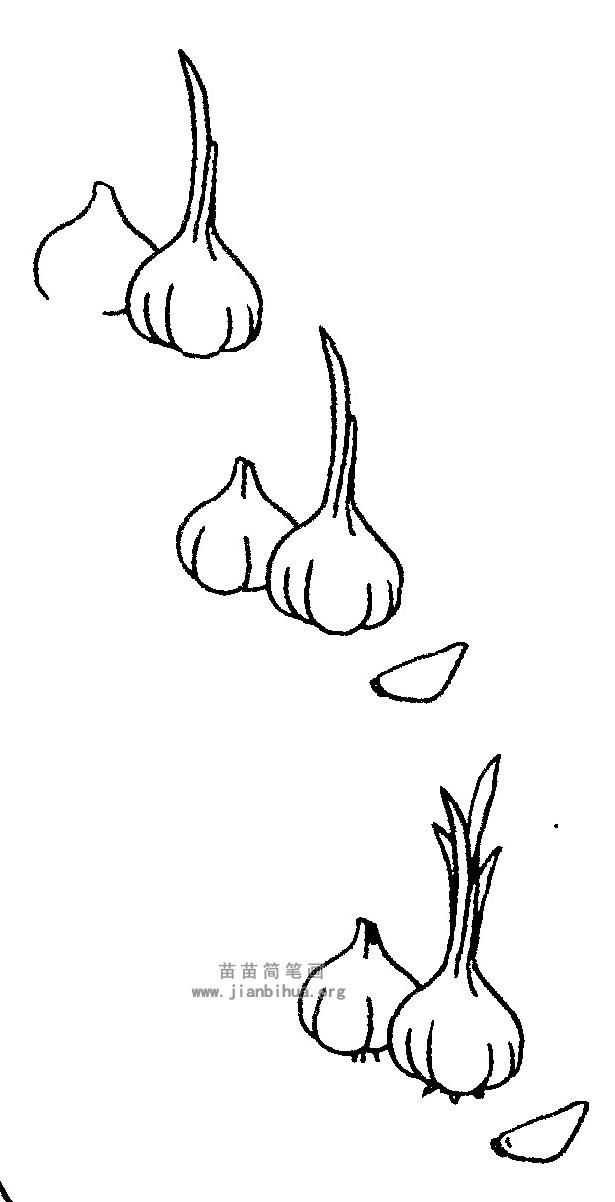 洋葱简笔画