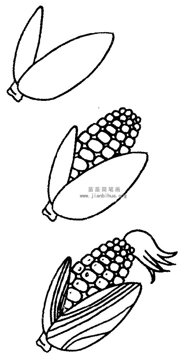 玉米简笔画图片与知识