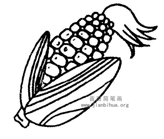 玉米简笔画