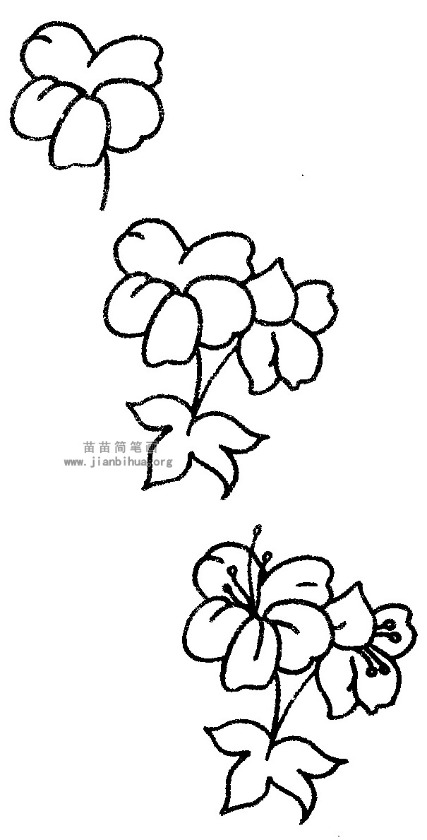 凤仙花,别名:指甲花,急性子,凤仙透骨草,拉丁文名:impatiens balsamina l.牻牛儿苗目、凤仙花科、凤仙花属一年生草本花卉,全