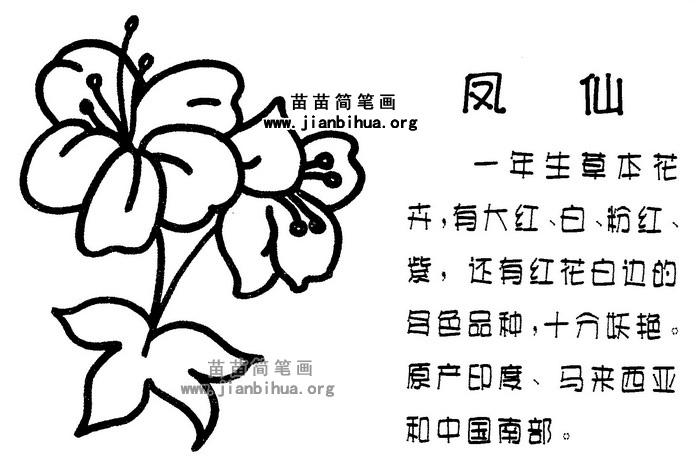 凤仙花简笔画图片与知识