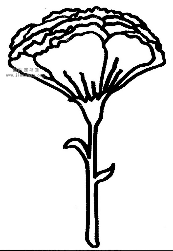 康乃馨简笔画