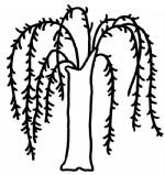 柳树简笔画图片与知识