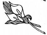 马蹄莲简笔画图片与知识