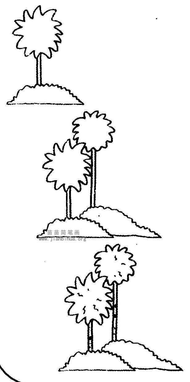 椰子树简笔画图片与资料 椰子树是常绿乔木,树干直立,不分枝。叶子丛生在顶部,羽状复叶,小叶细长,肉穗花序,花单性,雌雄同株。 椰子树是棕榈科椰属的一种大型植物,椰子是椰树的果实,是一种在热带地区很普及的果实。椰子树的普及也与其果实椰子可以在海中随风浪漂流上千公里后生殖到离母树非常远的地方有关。